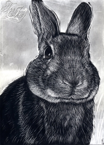 Scratchboard Rabbit