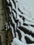snow on bark