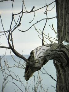 odd branch