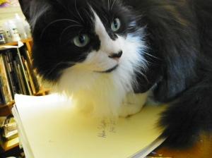 Toby Helper Cat