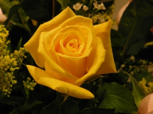 yellow rose of Texas
