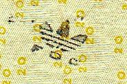 adidas FOC stamp on twenty dollar bill