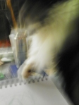 cat helping with drawing