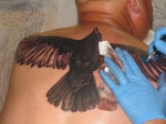 crow tattoo in progress