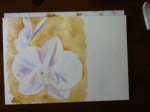 orchid watercolor in progress