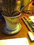 helper cat sampling paint water