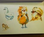 watercolor sketch of chickens