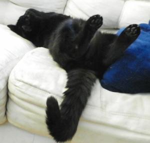 Tora Cat