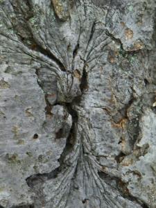 tree101_2731