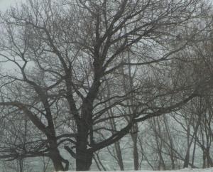 tree101_2756
