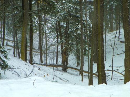 woods101_2732