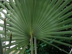 plant that looks like fan