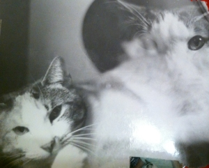 double exposed kitty photo