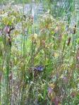 snake in reeds