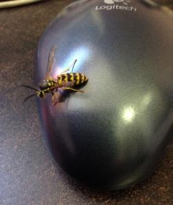 bee? wasp?