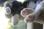 kitty toe beans