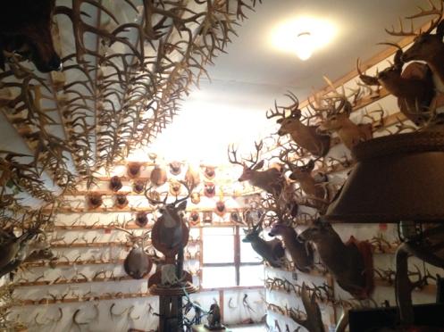 interior shot of the Antler Shed