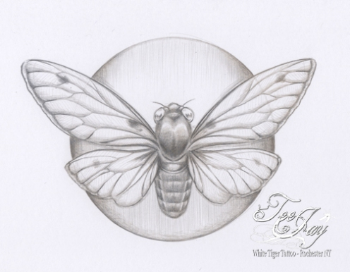 day079silverpointcicada