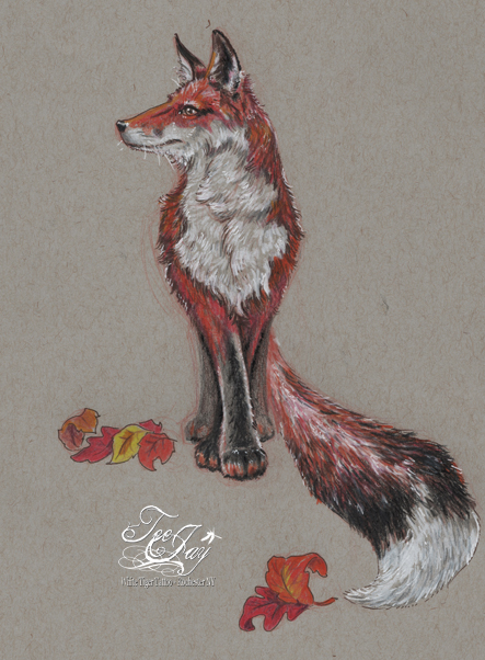 long tail fox