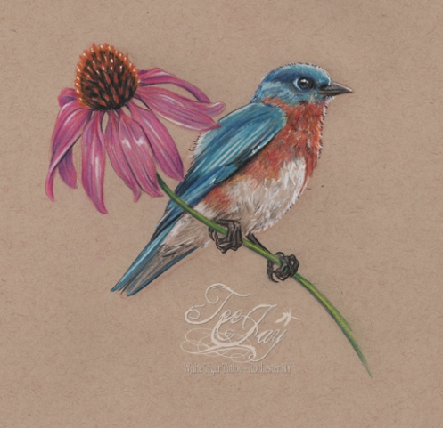 blue bird with coneflower