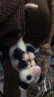 OpossumIMG_3620