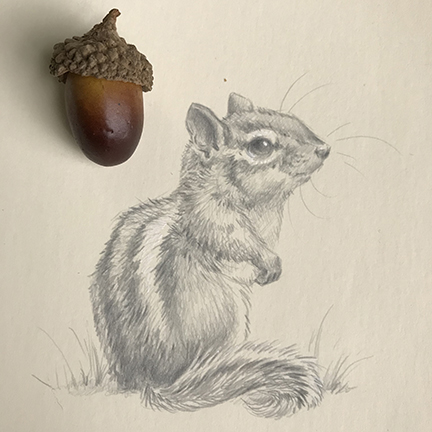 silverpoint chipmunk drawing